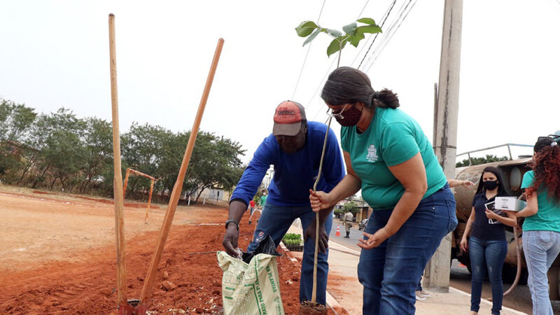 Três Lagoas: Meio Ambiente realiza plantio e distribuição de mudas em comemoração ao Dia da Árvore