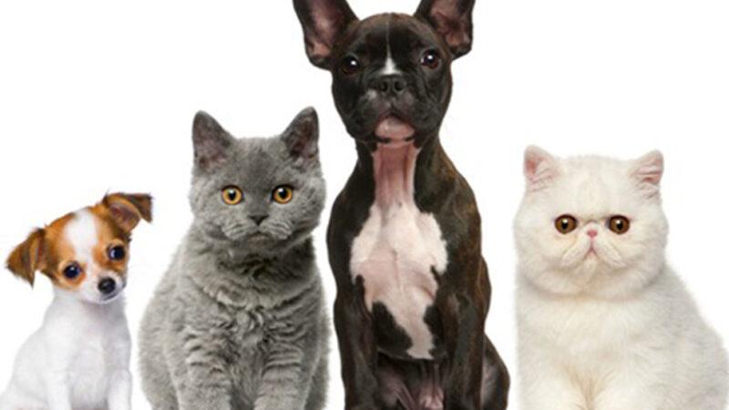 Três Lagoas: Sábado (24) tem vacinação de cães e gatos, no Parque de Exposições e no Ginásio Municipal de Esportes