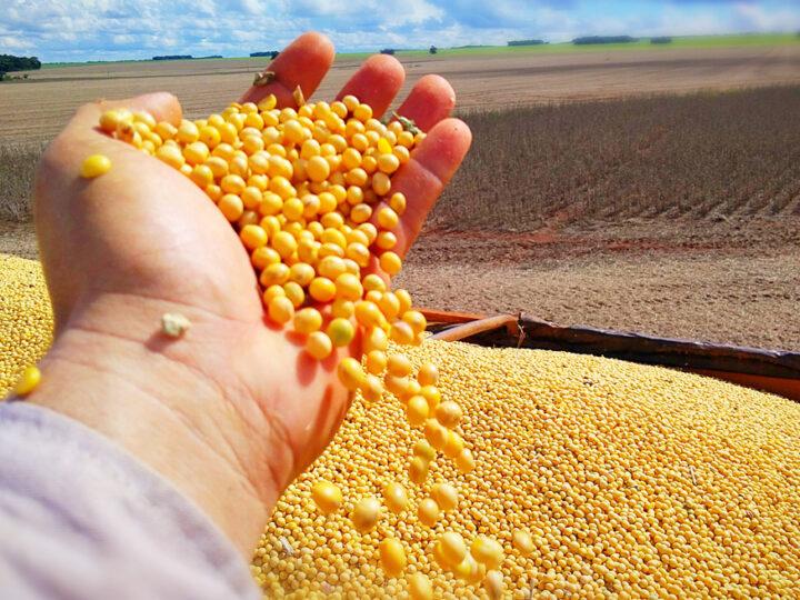 Em 2020, Mato Grosso do Sul exportou 4,8 milhões de toneladas de soja em grãos